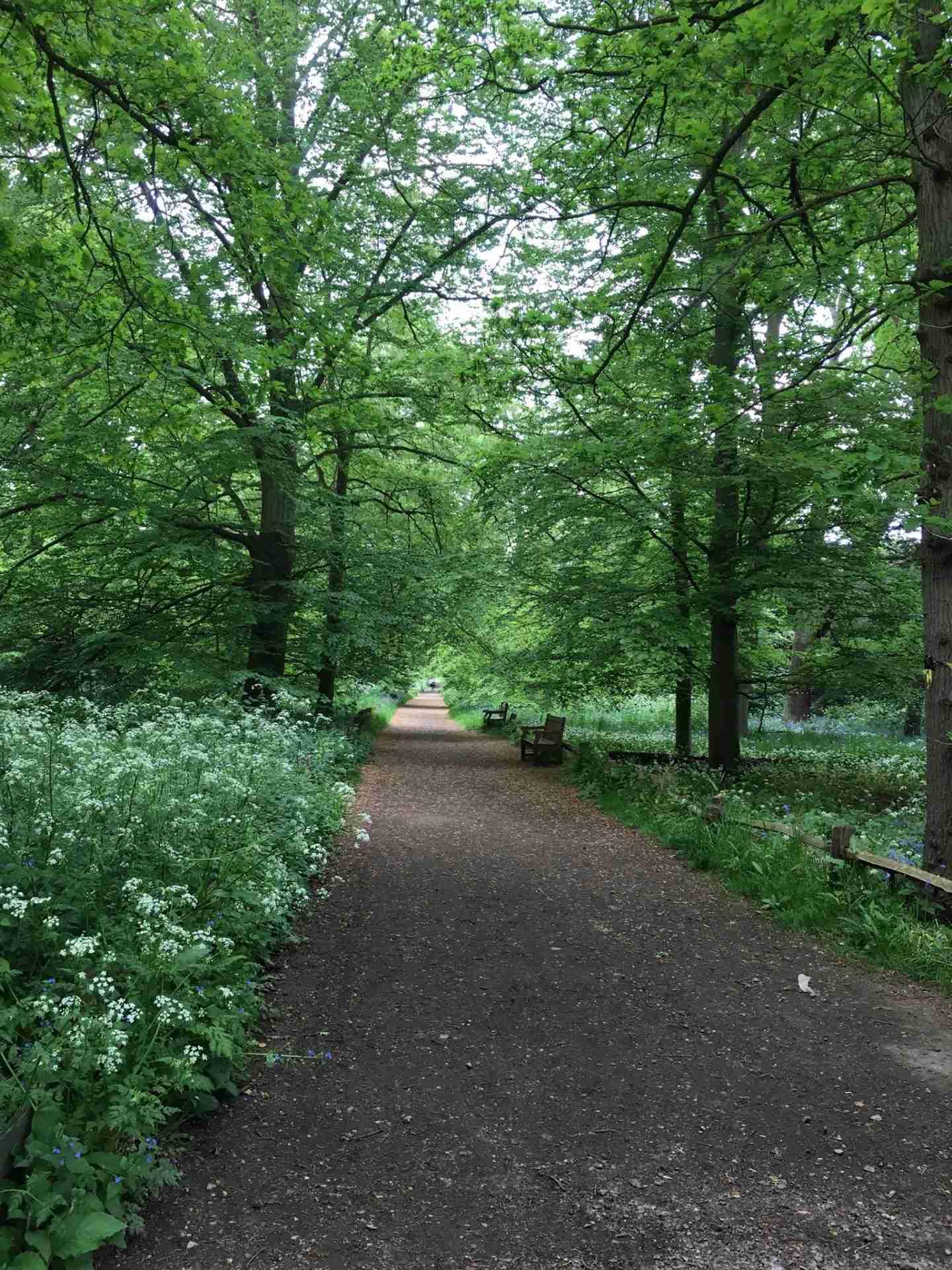 Trees Richmond Park pazbynature homepage