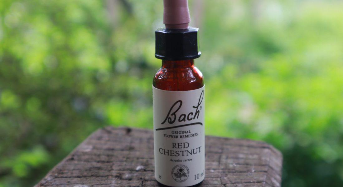 red chestnut Bach Flower remedy