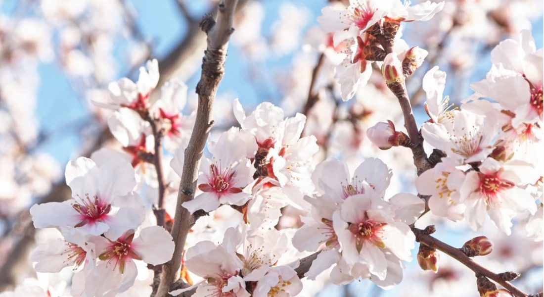 Blooming flowers and Spring Detox