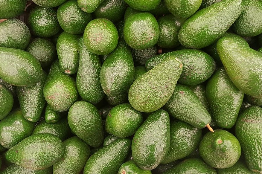 avocado-2351191_960_720