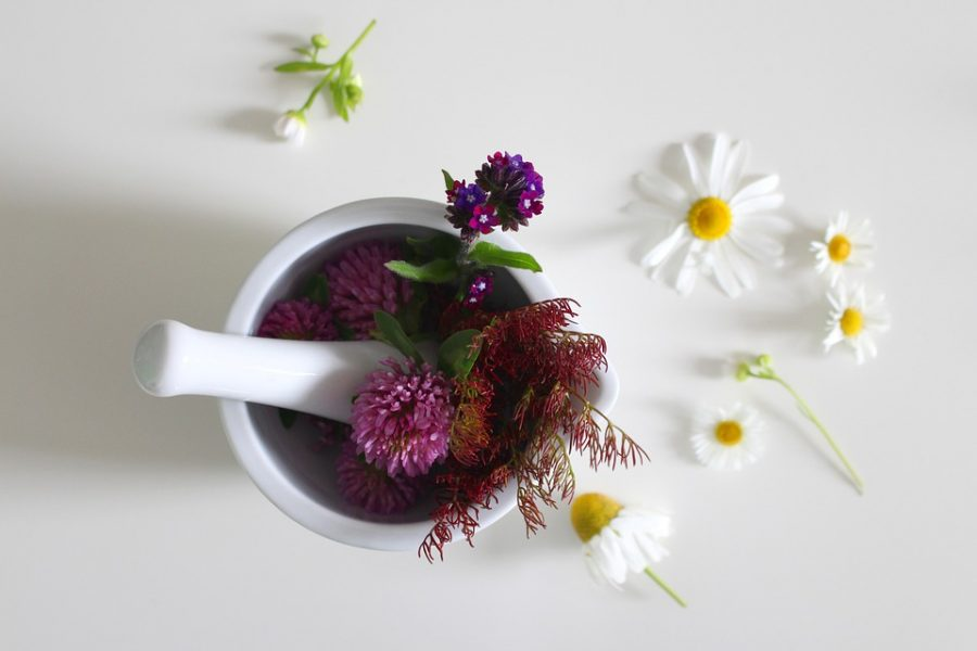 medicinal-flower-4246073_960_720